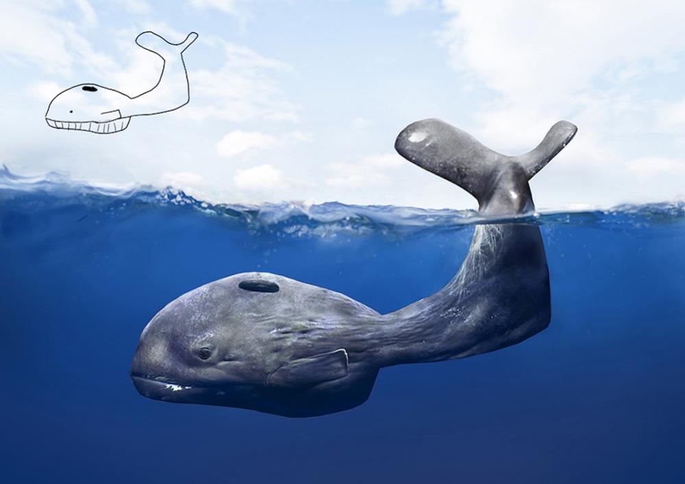 whale-finnsmall