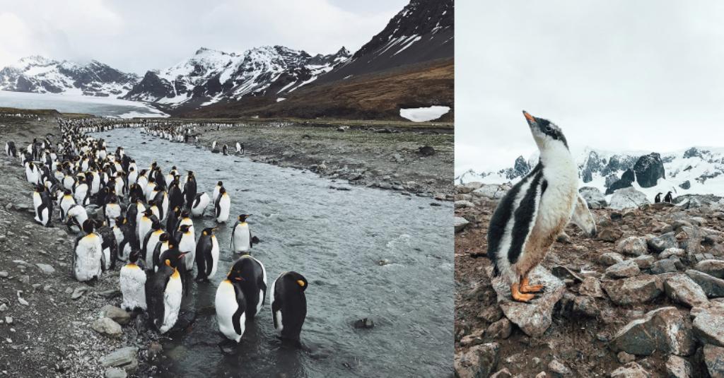 Reportage fotografico dell'Antartide con iPhone 7 Plus