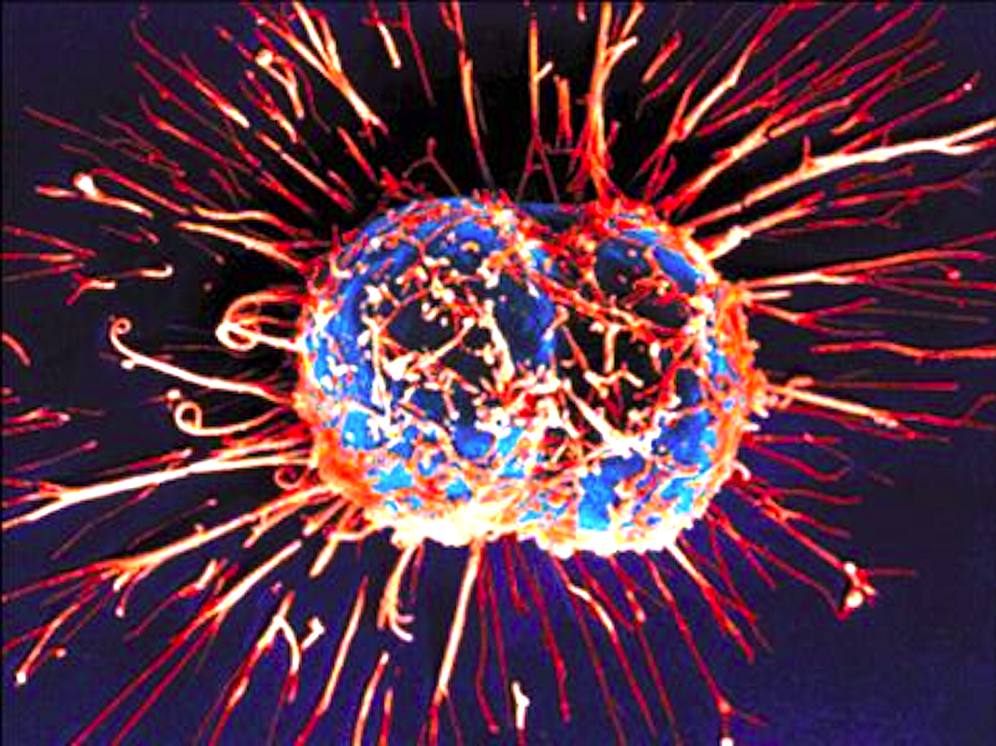 Un video mostra il movimento delle cellule in HD