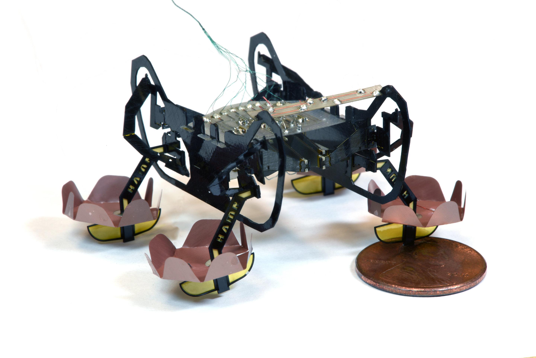 Creato ad Harvard il robot ispirato agli scarafaggi