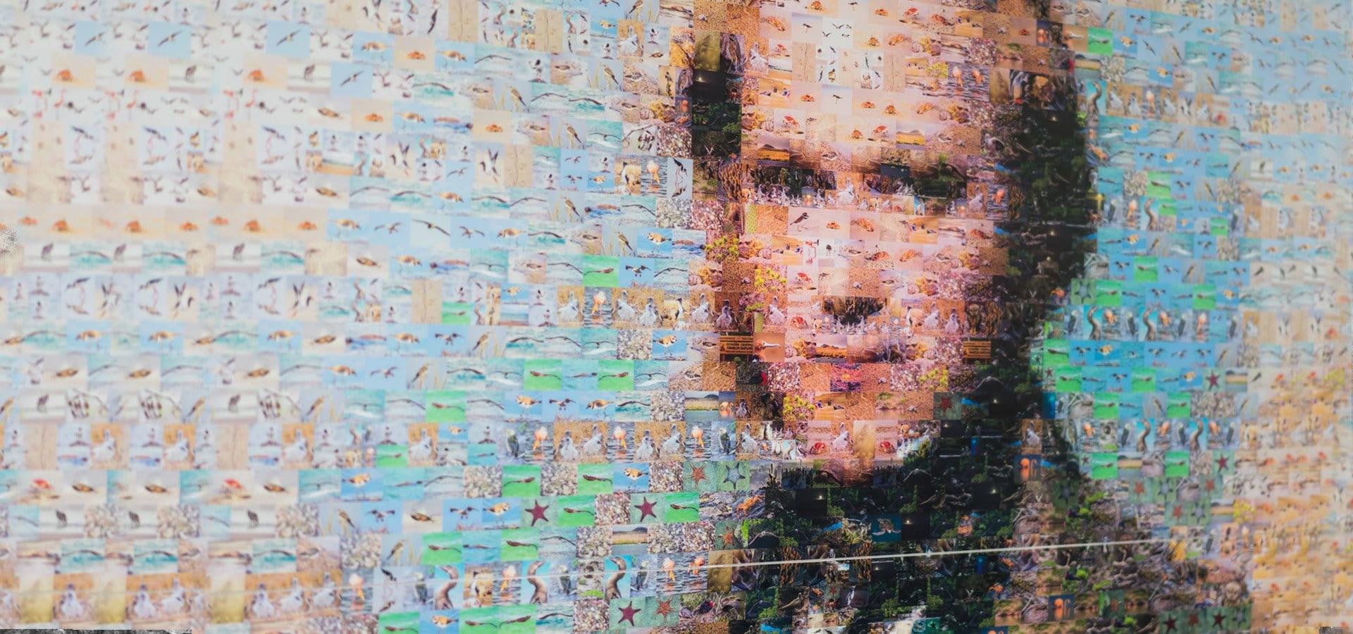 Il nuovo viaggio di Darwin secondo Luca Novelli