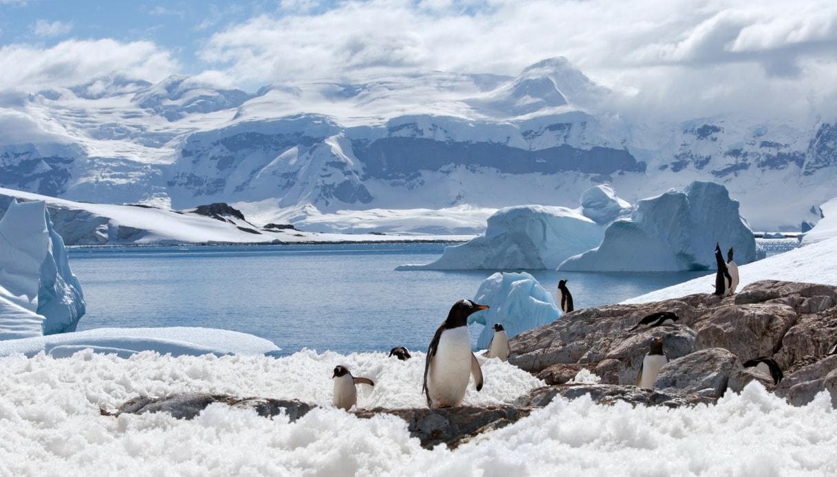 Il mio viaggio in Antartide: 6