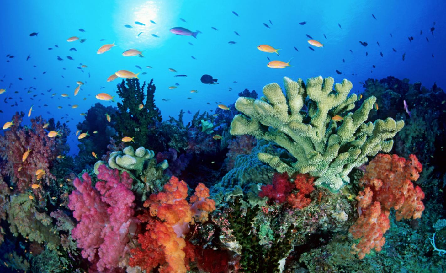La Grande Barriera Corallina diventa bianca, è la terza volta in cinque anni