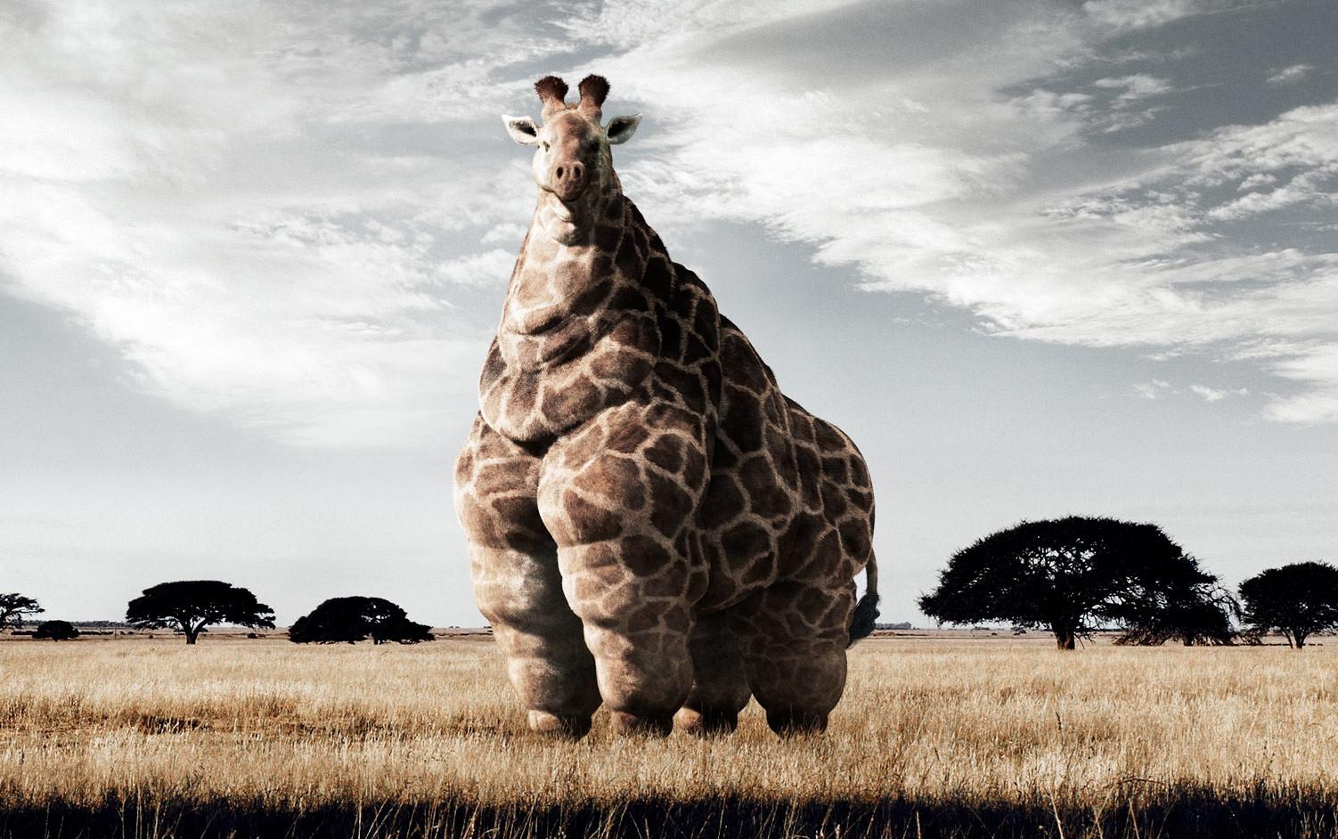 Obesità mondiale: il trend si è invertito, si ingrassa più in campagna che in città
