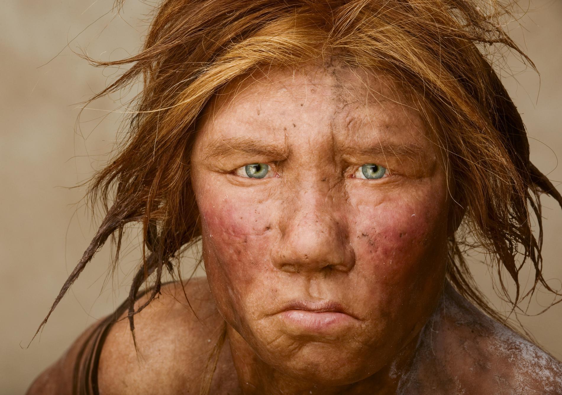 Individuata la vera causa dell'estinzione dell'uomo di Neanderthal