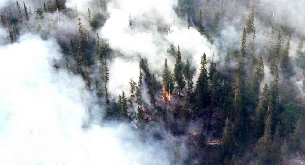 Siberia e Alaska in fiamme: è un disastro senza precedenti, ecosistemi distrutti e milioni di tonnellate di CO2 nell'atmosfera
