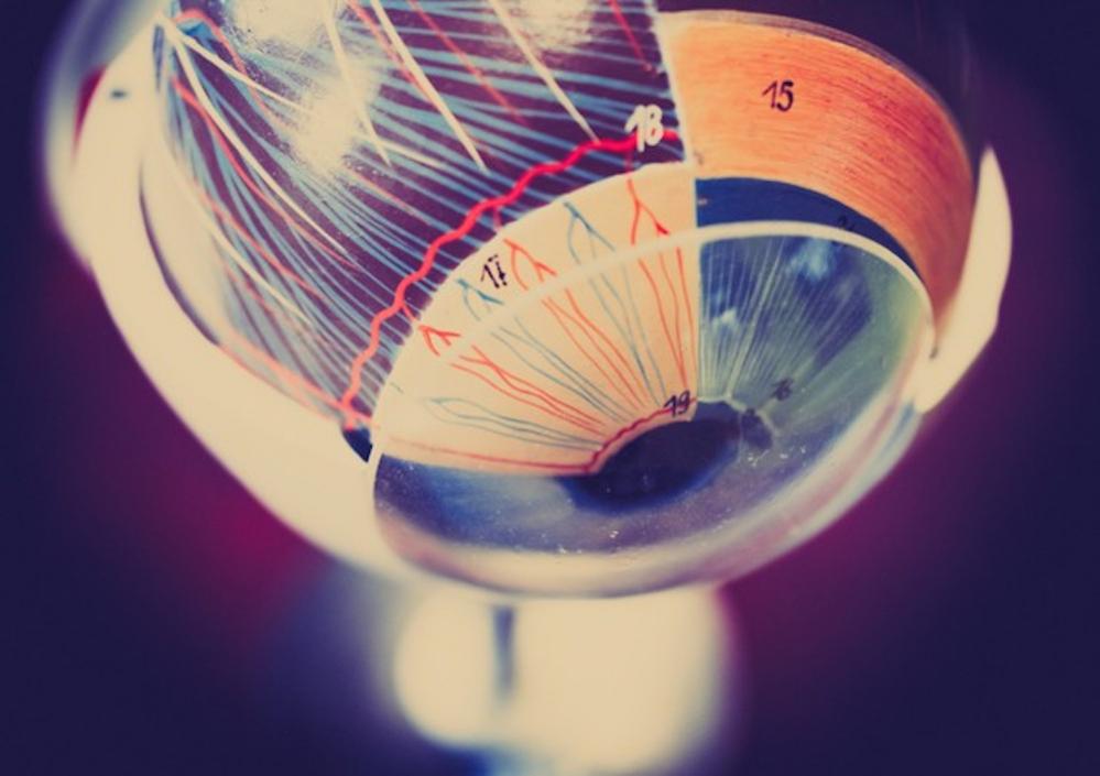 Un occhio su chip, creato in 3D con cellule umane - Scienza & Tecnica