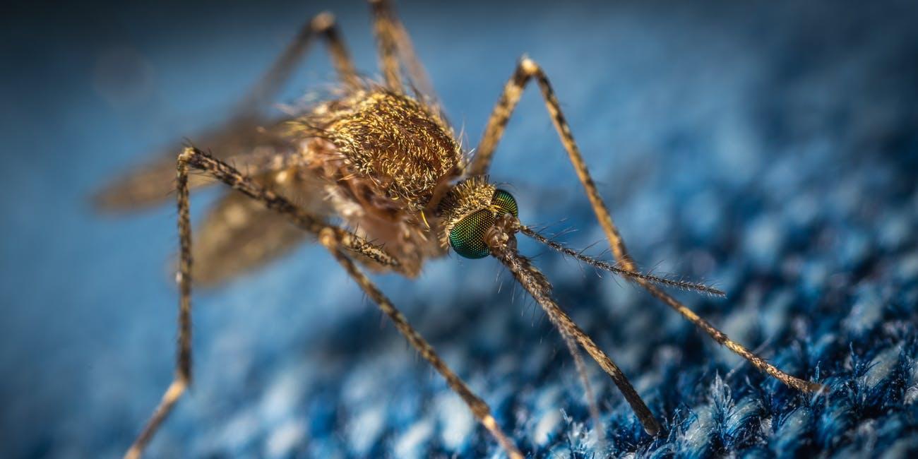 Stato di allerta in USA a causa di una zanzara portatrice di un virus mortale