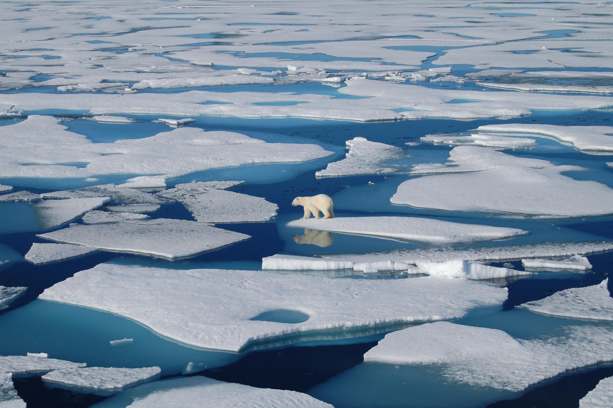 Rapporto ONU: ecco come il cambiamento climatico sta già alterando gli oceani e la criosfera del nostro pianeta