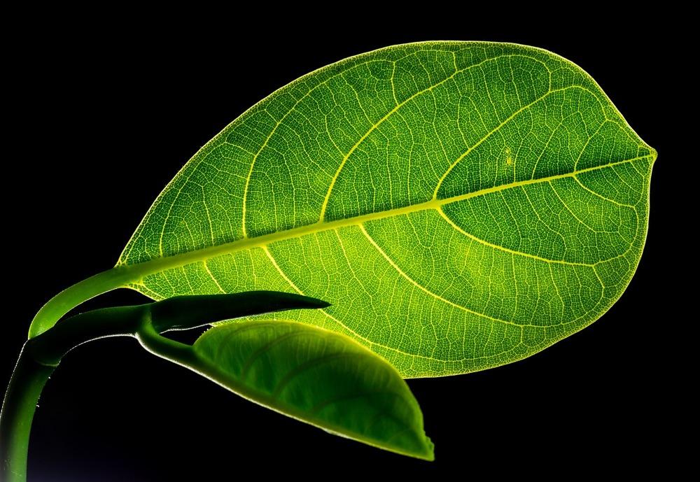 Imitando la fotosintesi è possibile ottenere metanolo dall'anidride carbonica