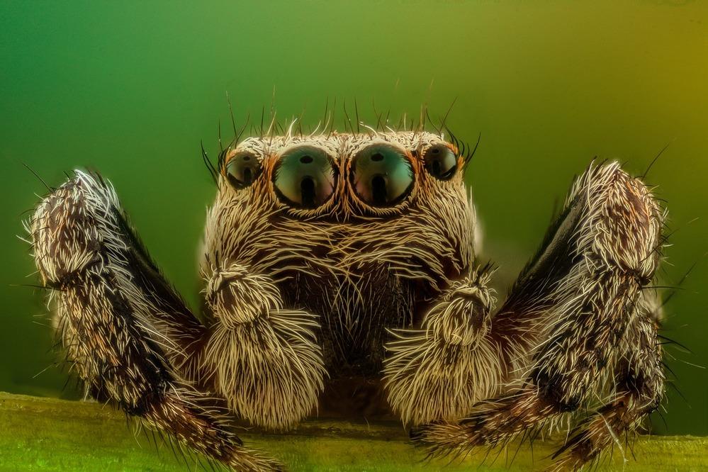 Lenti innovative con sensori di profondità compatti ispirate dai ragni