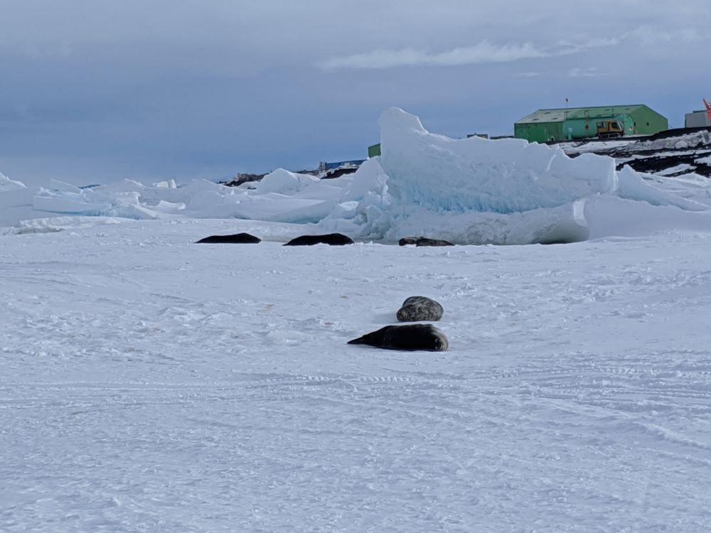 Il mio viaggio in Antartide v2.3