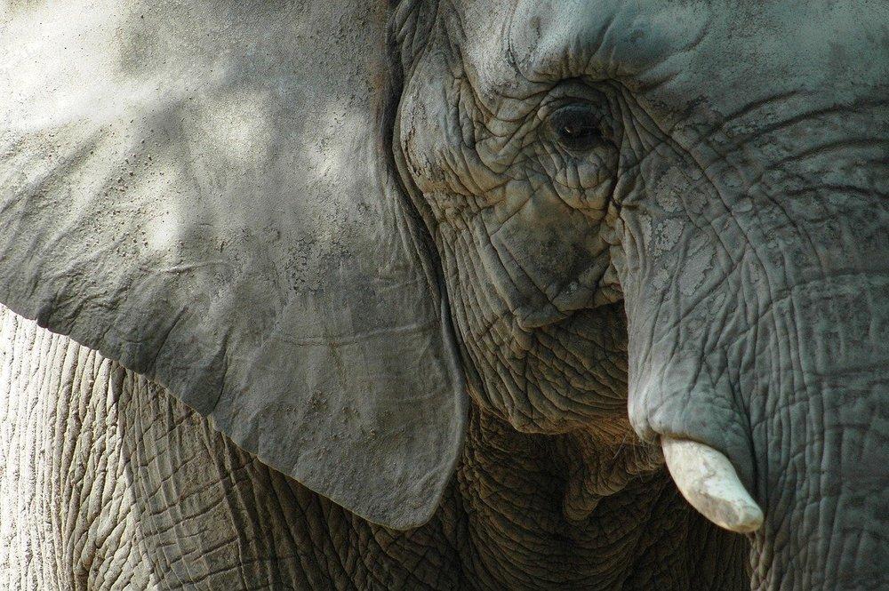 PROBOSCIS, il progetto che si ispira alla proboscide degli elefanti