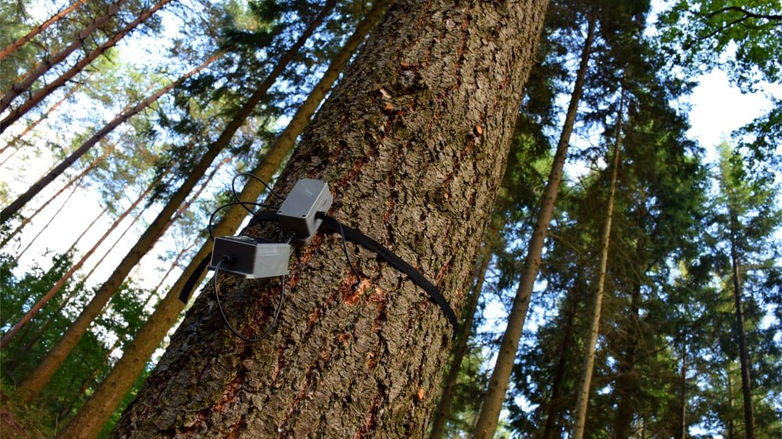 Gli alberi che parlano e la Foresta 4.0