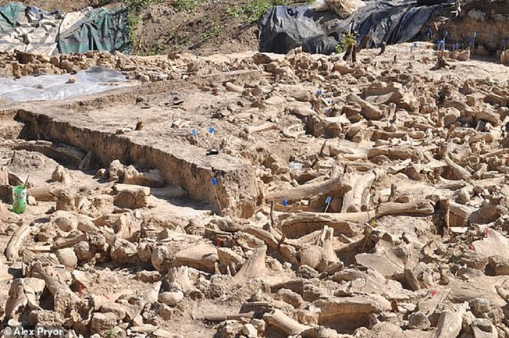 """Cerchio di ossa di mammut, il mistero si infittisce: """"non erano abitazioni"""""""