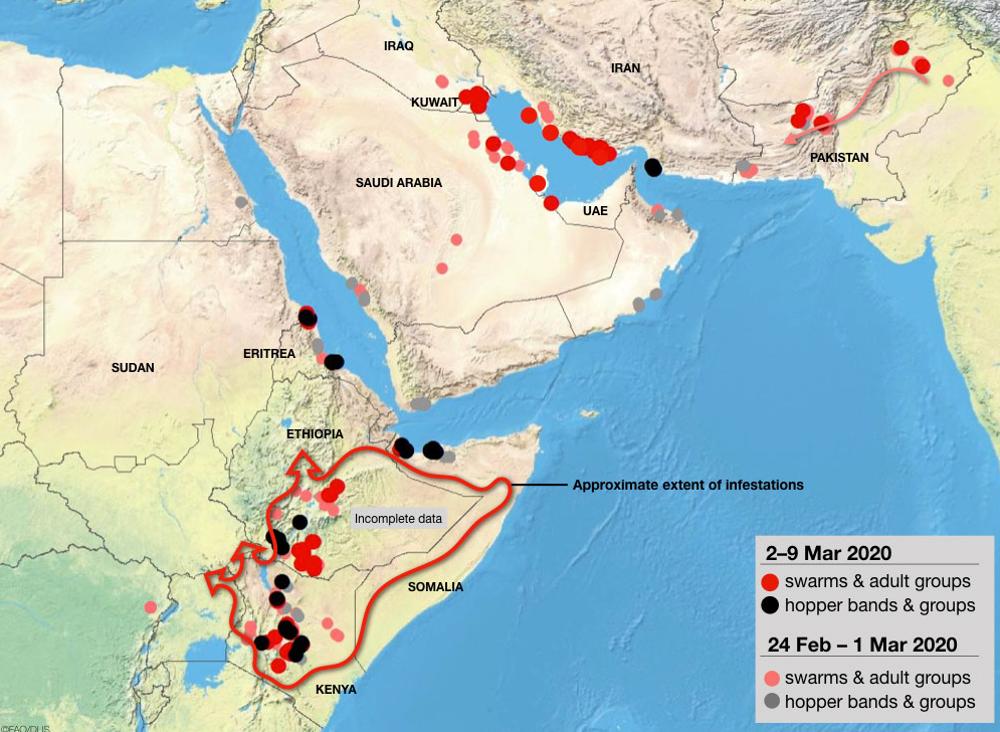Invasione di locuste: ecco i dati aggiornati