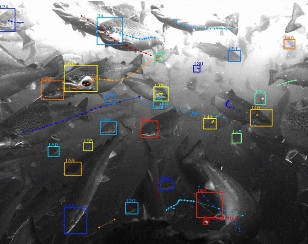 Google lancia Tidal, l'IA per studiare e proteggere gli oceani