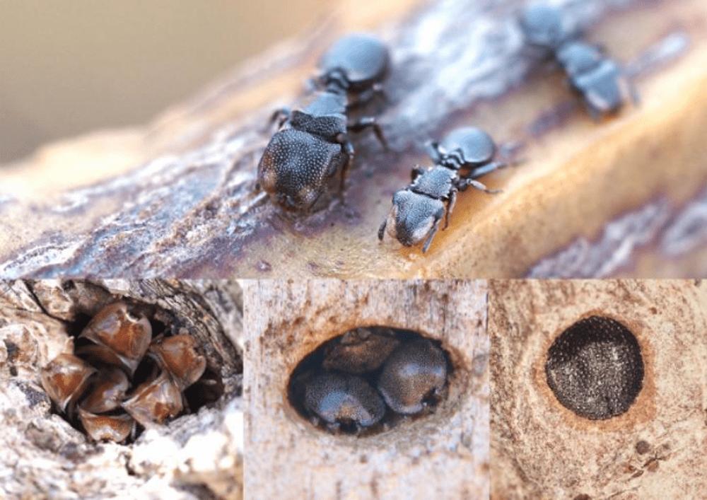 L'evoluzione può andare al contrario: lo svela uno studio sulle formiche
