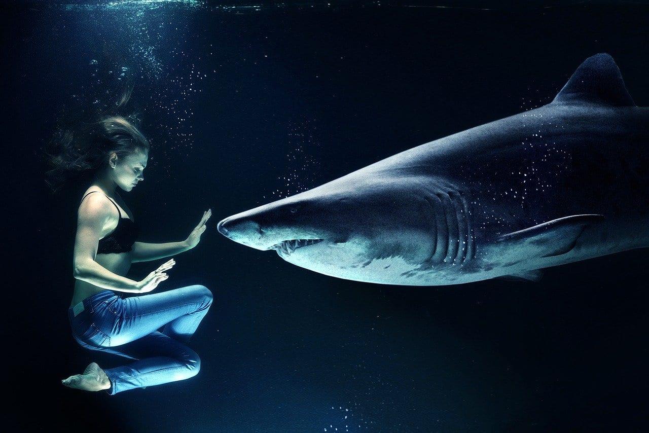 Ecco qual è la connessione tra vaccino anti-Covid e gli squali