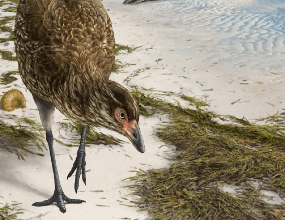 Wonderchicken, scoperto il più antico fossile di uccello moderno