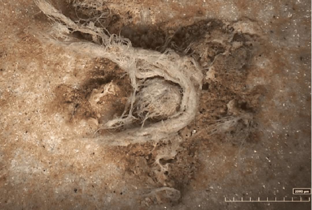 La corda più antica del mondo: ha 52.000 anni e fu intrecciata dai Neanderthal