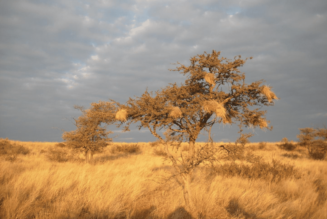 Le precipitazioni saranno essenziali per le piante per contrastare il riscaldamento globale