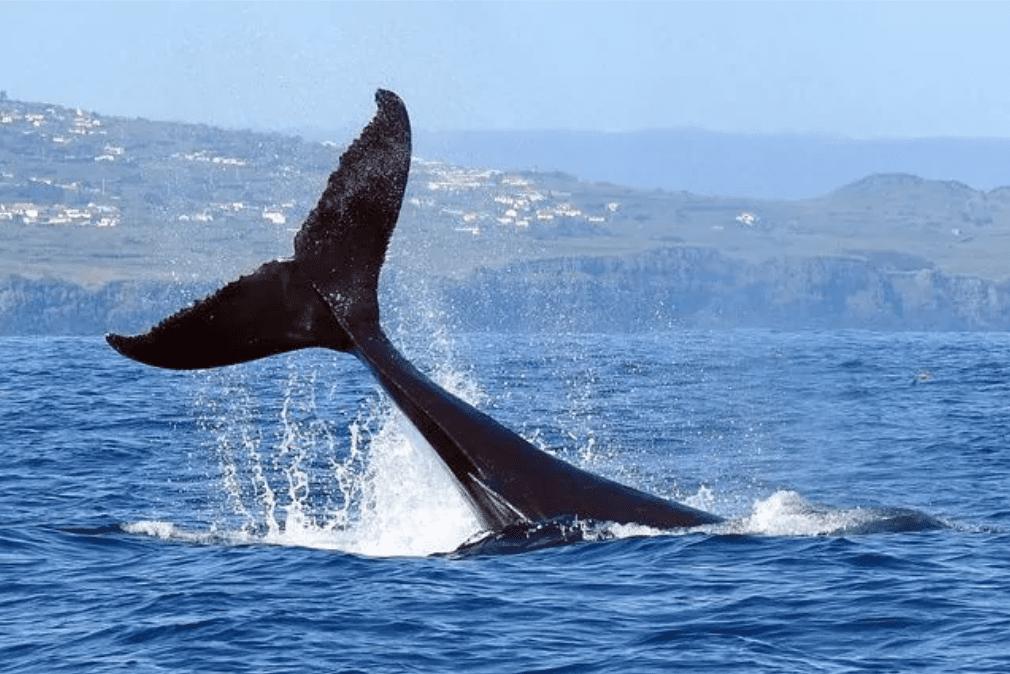 Balene e delfini sono contro ogni logica super-resistenti ai tumori