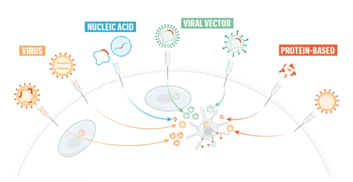 Vaccini e coronavirus: la guida grafica di Nature