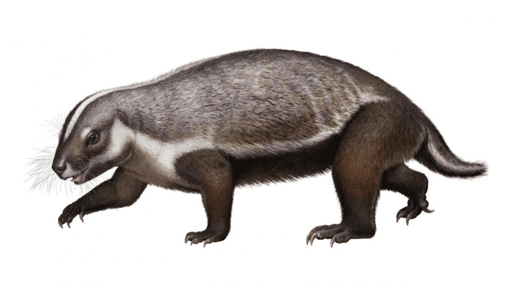 Adalatherium: mammifero di 66 milioni di anni fa ricostruito in 3D