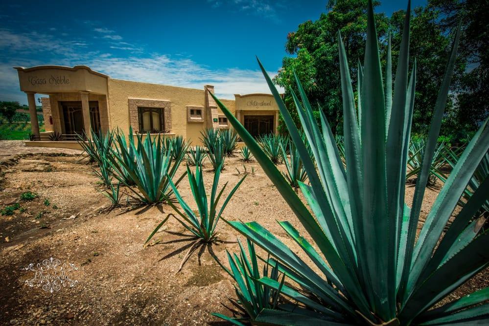 agave da tequila