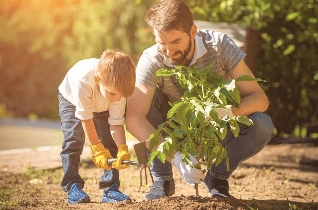 Piantare alberi non è la panacea per combattere il cambiamento climatico