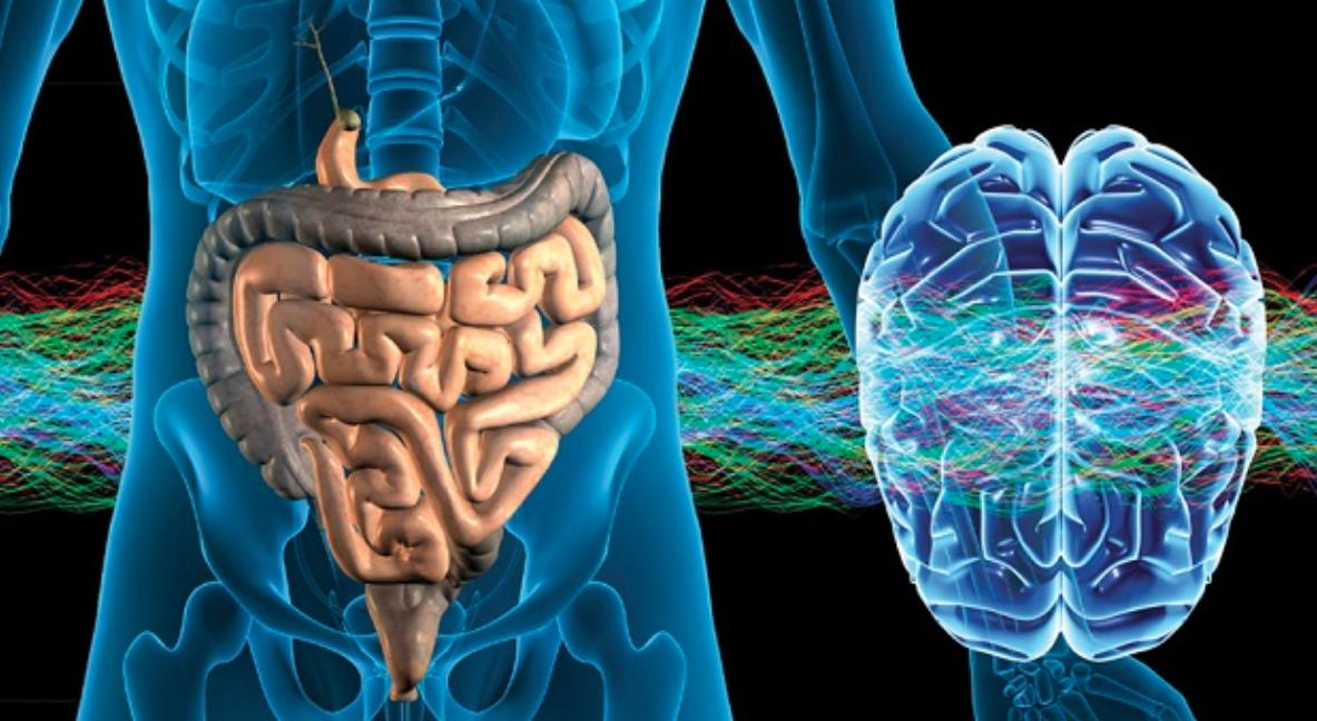 Psicobioma: i batteri intestinali possono alterare il modo in cui pensi