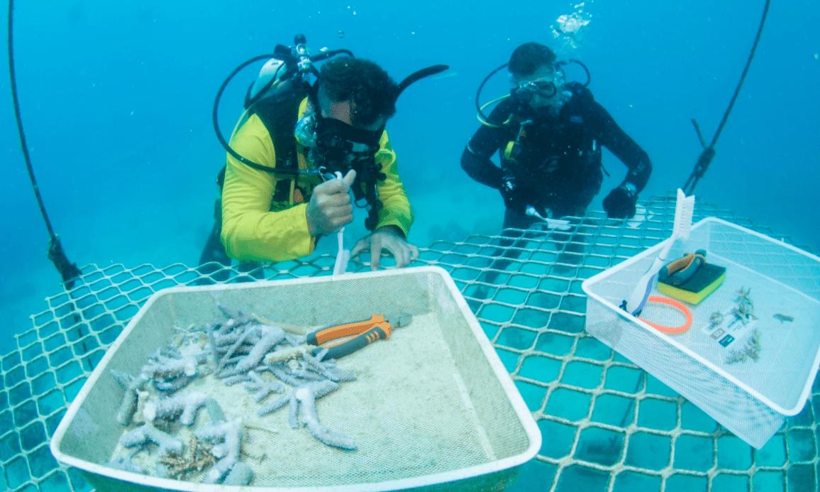 Australia: senza turisti si lavora a ripopolare la barriera corallina
