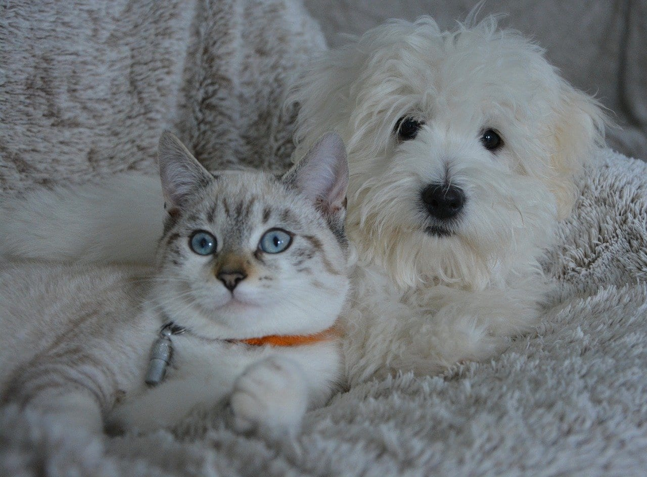 Cani e gatti bannati dalla lista degli animali commestibili in alcune città cinesi