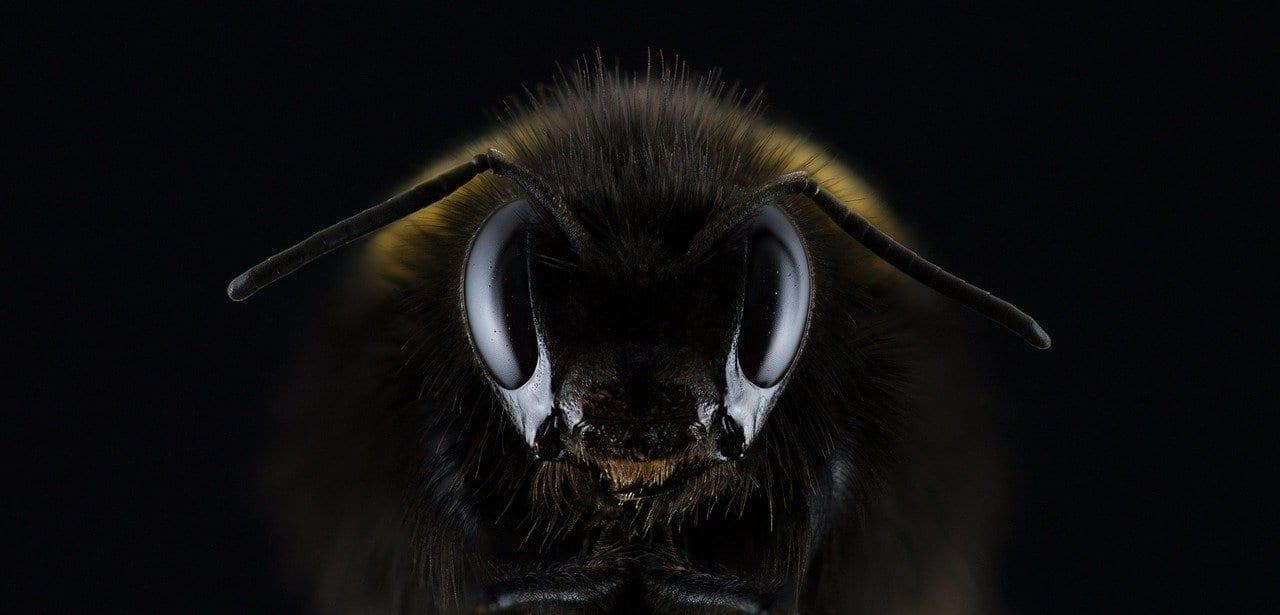 Anche le api dovranno sopravvivere a una loro pandemia