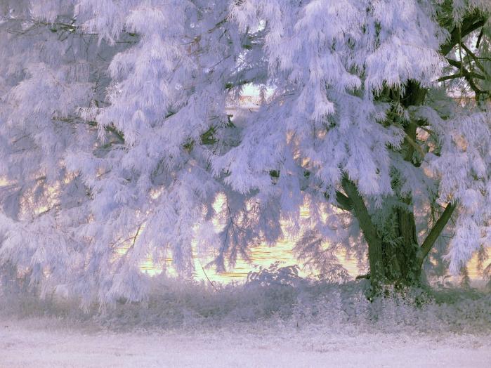 albero infrarossi