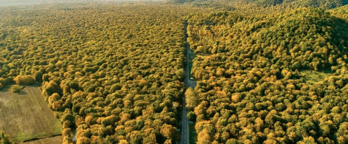 100 milioni di alberi verranno piantati in Sud Sudan nei prossimi 5 anni
