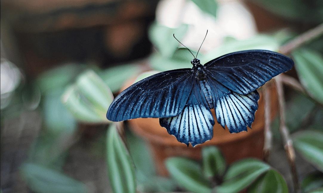 Display a colori plasmonici: la nanotecnologia ispirata alle ali delle farfalle
