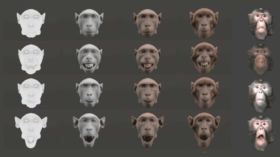 Zona perturbante: le scimmie (come gli uomini) preferiscono animazioni realistiche