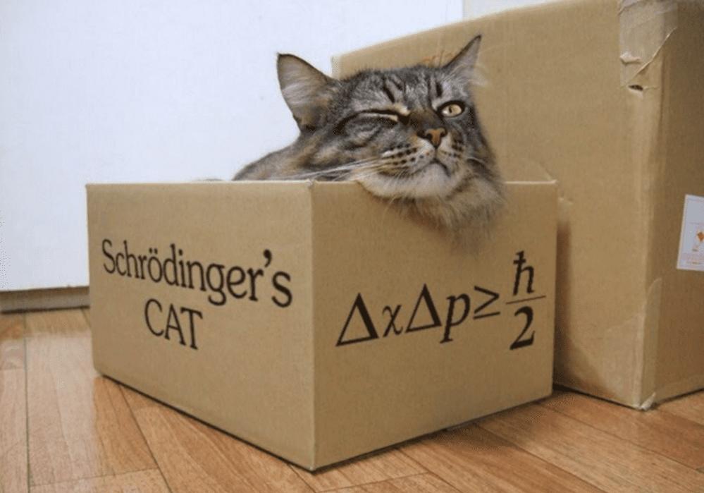Gatto di Schrödinger