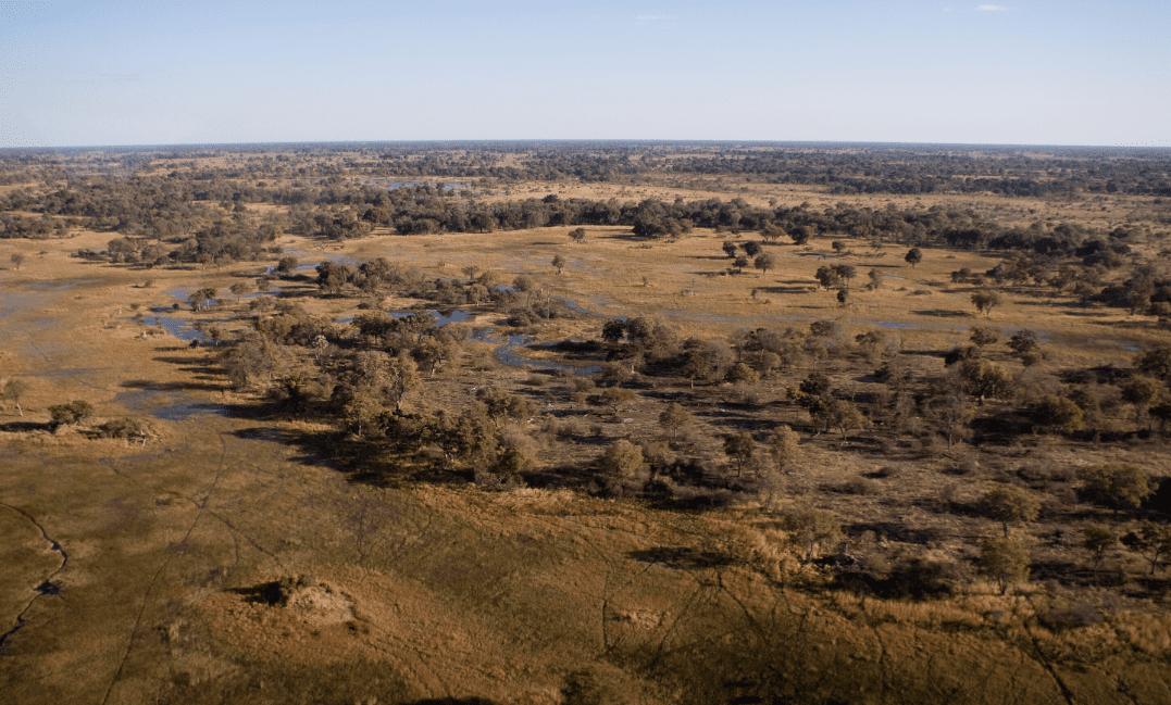 Evoluzione del cervello: cacciare in paesaggi simili alla savana è stato cruciale
