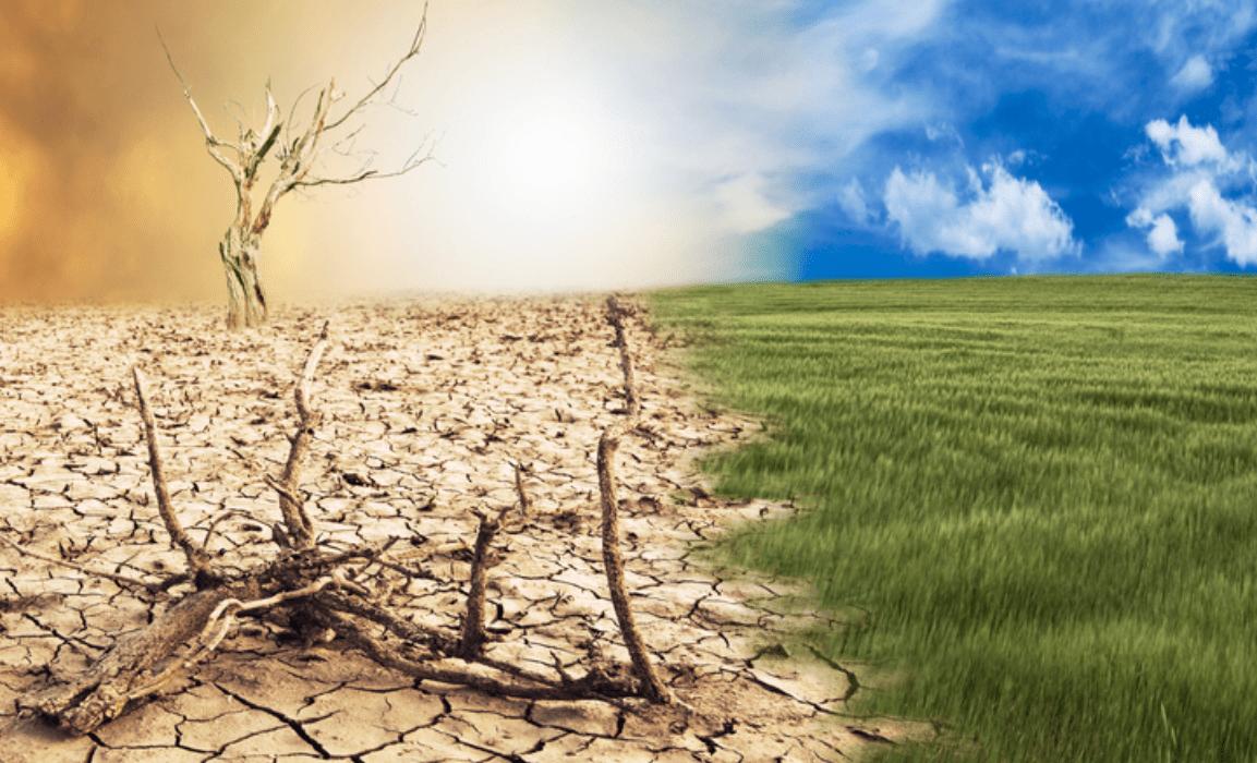 Cambiamenti climatici: la Svezia di Greta Thunberg è tra i paesi meno sensibili al problema
