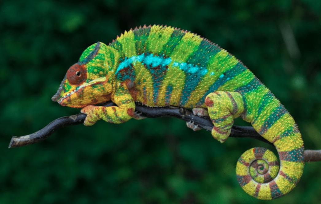 Robot con la pelle di camaleonti grazie a un nuovo film nanostrutturato