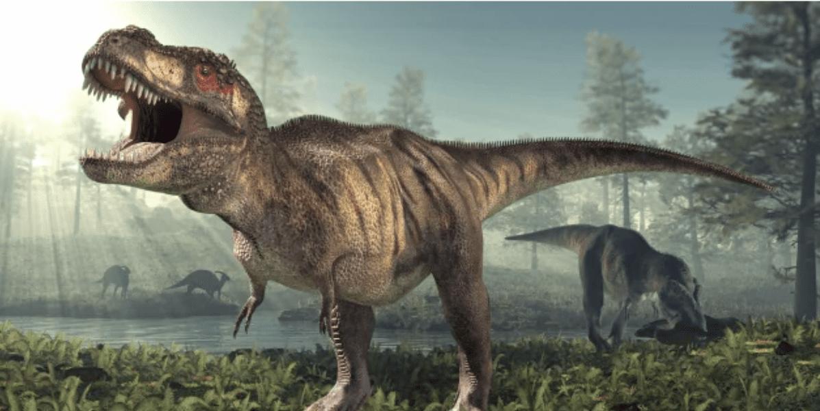 Un dinosauro grande come il Tyrannosaurus Rex che viveva in Australia