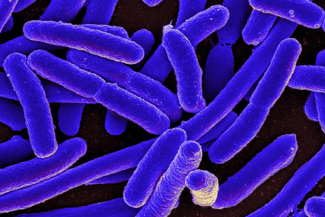 Combattere come i batteri per trovare alternative agli antibiotici