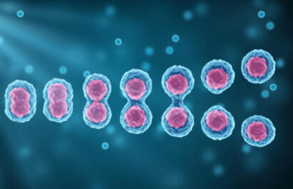Replicazione DNA: il sistema di controllo qualità può fallire così tanto da creare più danni che se non ci fosse proprio