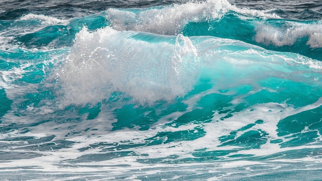 Giornata Mondiale degli Oceani: un appuntamento per la salvaguardia del nostro pianeta