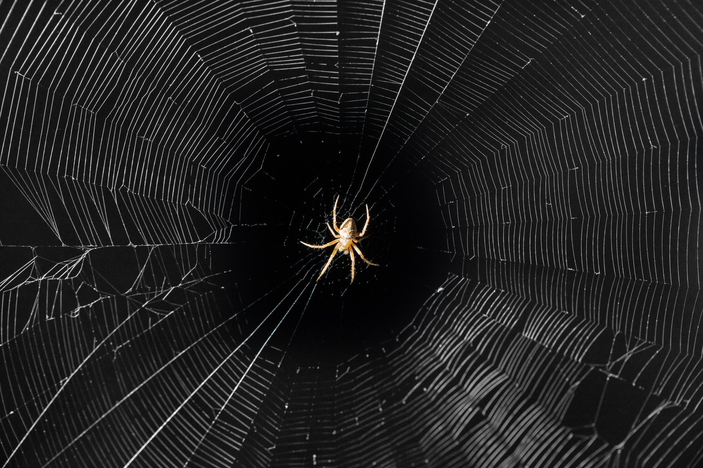 La tela del ragno