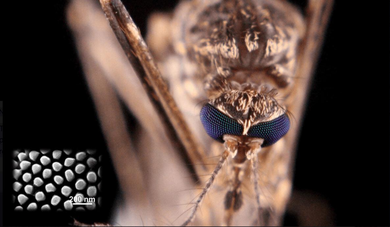 Superfici idrorepellenti potenziate grazie allo studio degli insetti