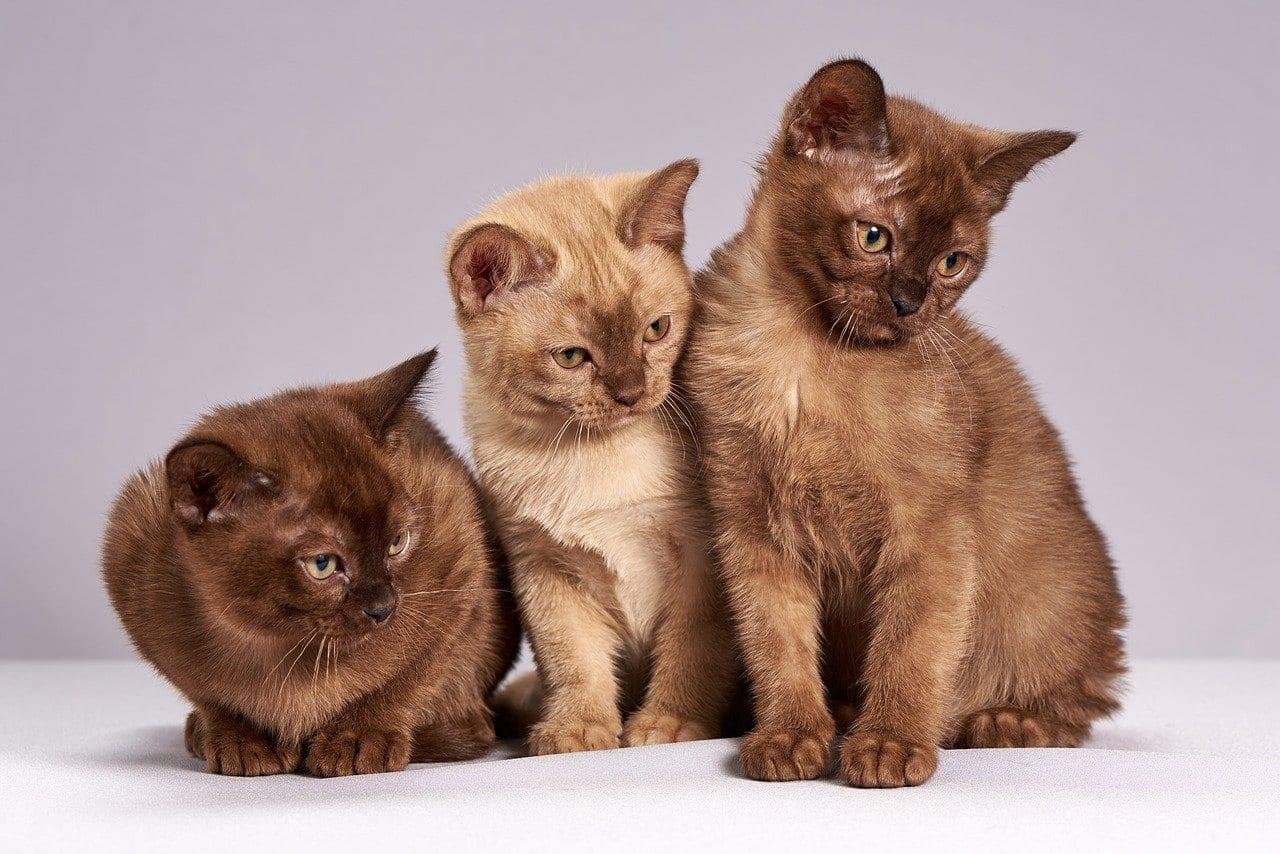 """Una ricerca dimostra che i gatti sono meno """"fedeli"""" dei cani"""
